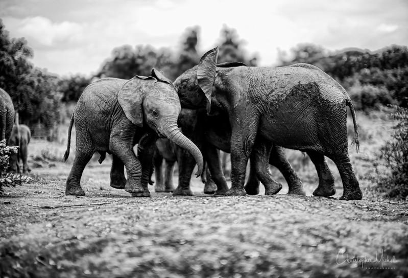 Aug312013_nairobi_blixen_elephant_m9_2840.jpg