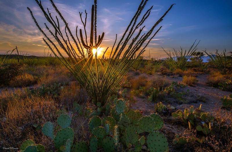 Ocotillo sunset.jpg