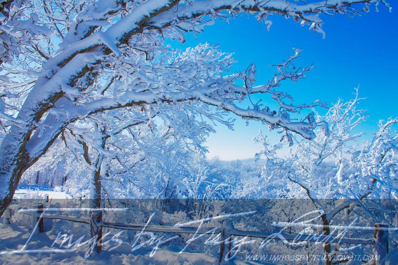 snow_3331 copy copy.jpg