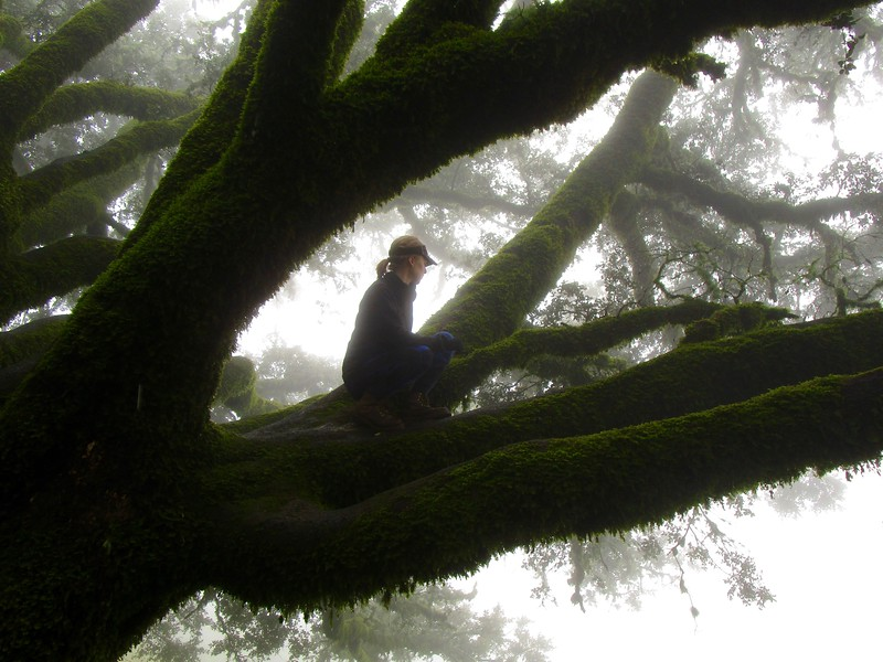 Young Woman on Ancient Oak
