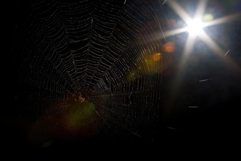 Spiderman-101.jpg