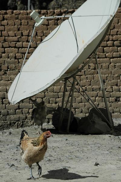 Chicken Near Satellite Dish - Osh to Sary Tash, Kyrgyzstan