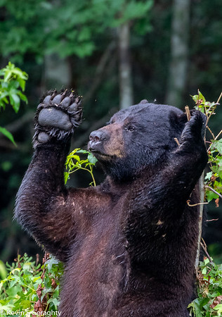 Black Bear, Red Wolves, birds, snakes and more