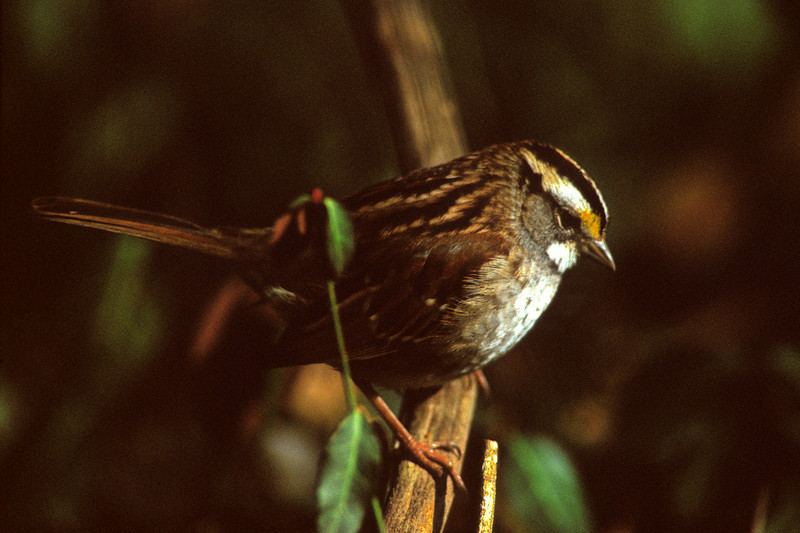 Anticipation