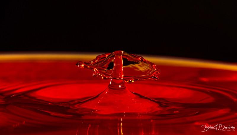 Red_Drops-0990.jpg