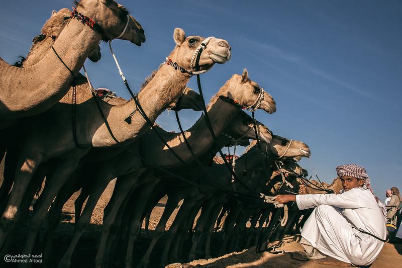 camel  (17)-Edit-Edit.jpg