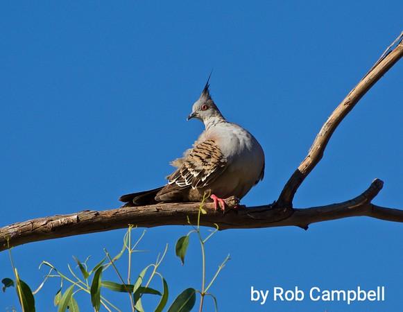 Rob's Outback Australia