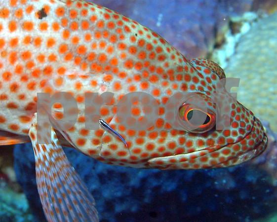 FISH BEHAVIOR
