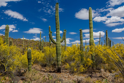 Saguaro National Park (Arizona)