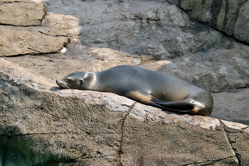 Ocean Park, Seals