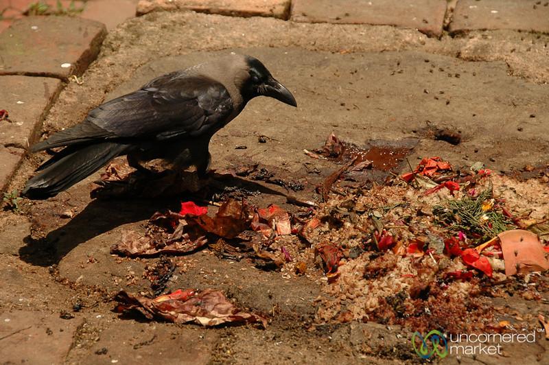 Crow Picks Through Offerings - Bhaktapur, Nepal