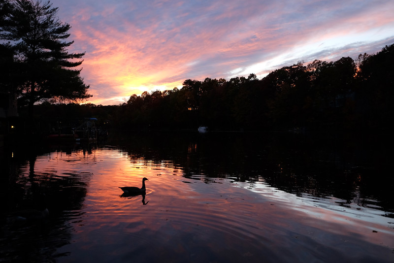 Goose in a Lake Thoreau sunset