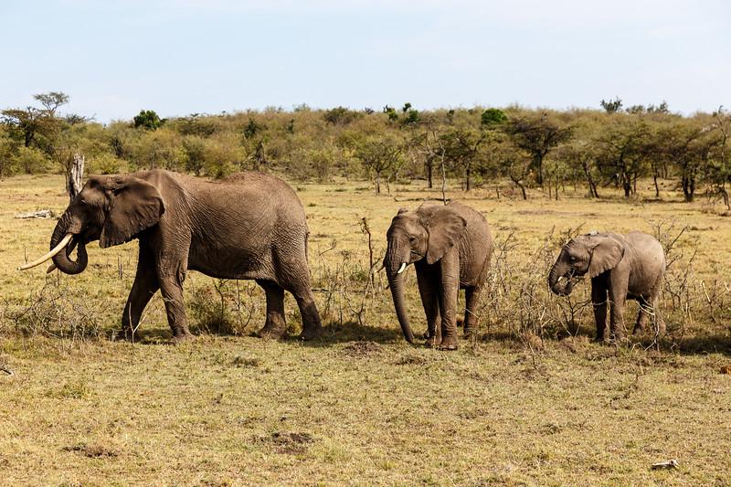 Kenya 2015-09946.jpg