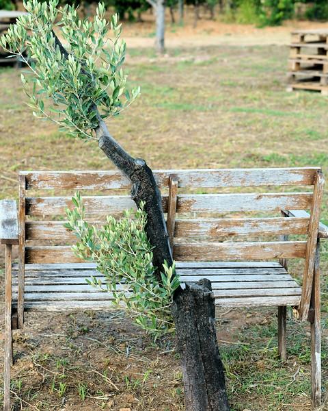 08_19 toulon pieracci bench and tree DSC04425.JPG