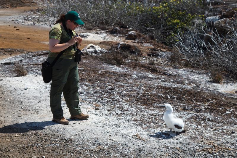 Shannon with Nazca Booby chick at Prince Phillip Steps, Genovesa, Galapagos, Ecuador (11-25-2011) - 808.jpg