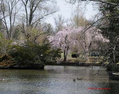 Lexington Cemetery