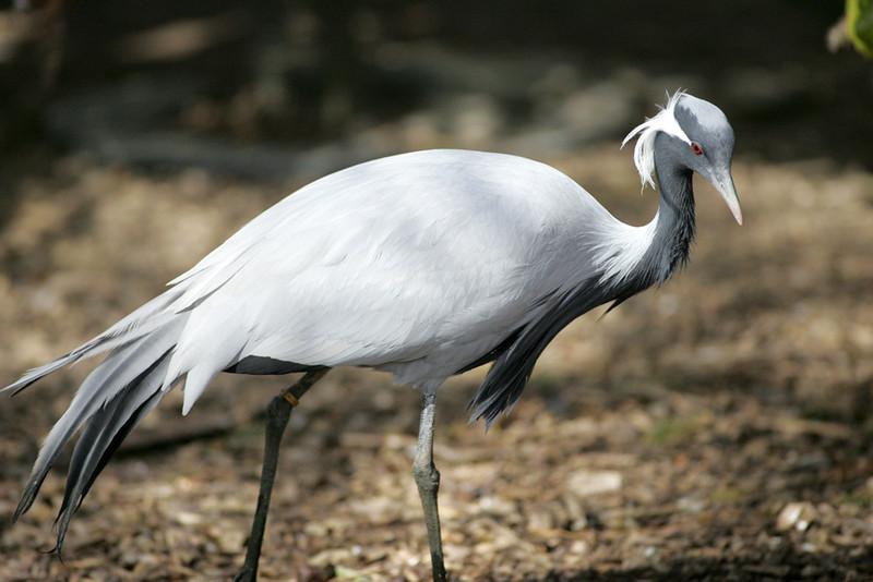 Newquay Zoo 094.jpg
