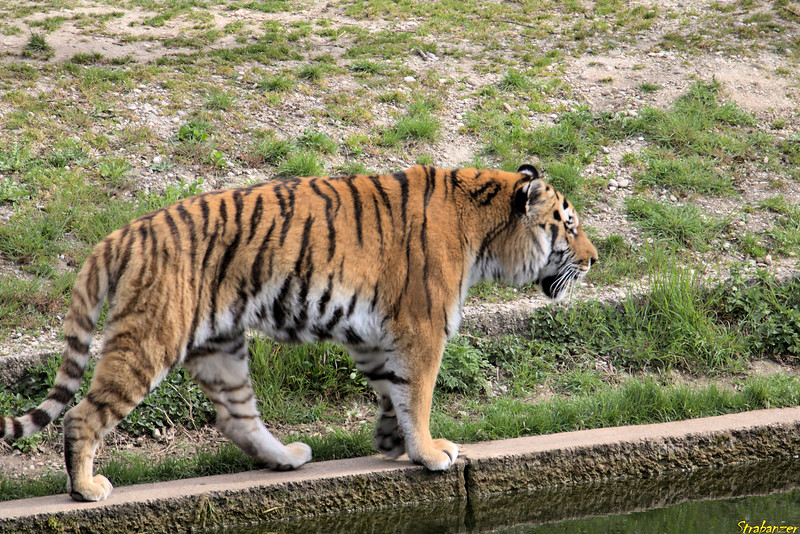 Munich Tierpark, 04/04/20199