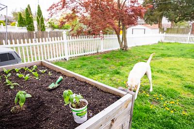 Planting Basil April 21st 2019
