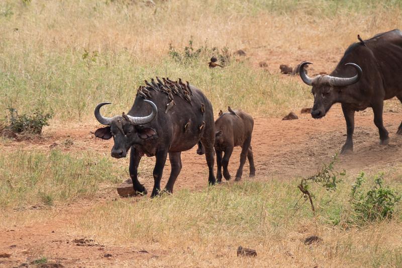 Jay Waltmunson Photography - Kenya 2019 - 194 - (DSCF5630).jpg