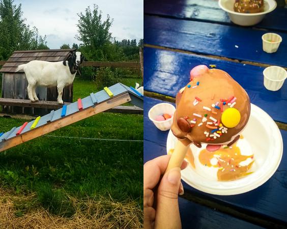 Goat and Caramel Apple.jpg