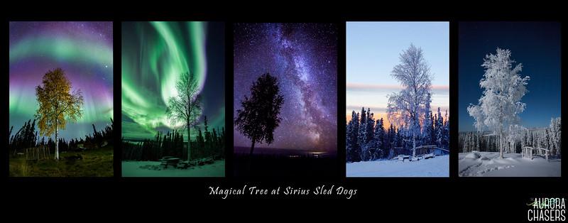 Magical tree.jpg