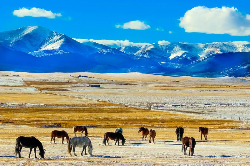 Animals-Horses-29.jpg