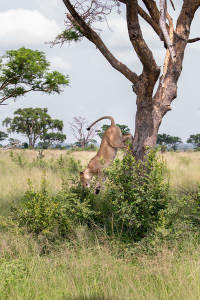 Uganda_T_QE-1547.jpg