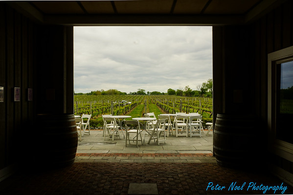 Pelligrini Vineyards