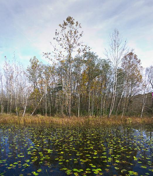 The Marsh i3.jpg