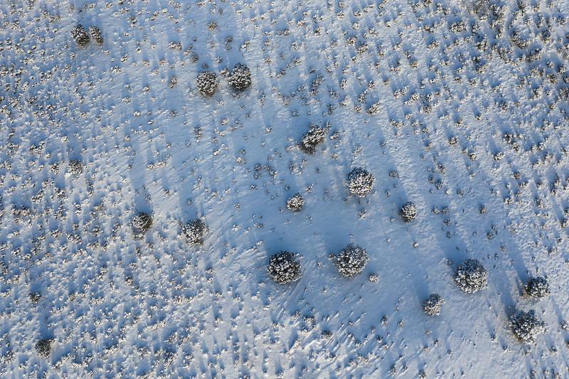 snow-dots.jpg