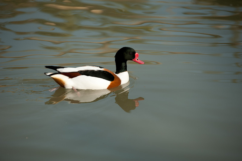 Sylvan Waterfowl Park_061.jpg