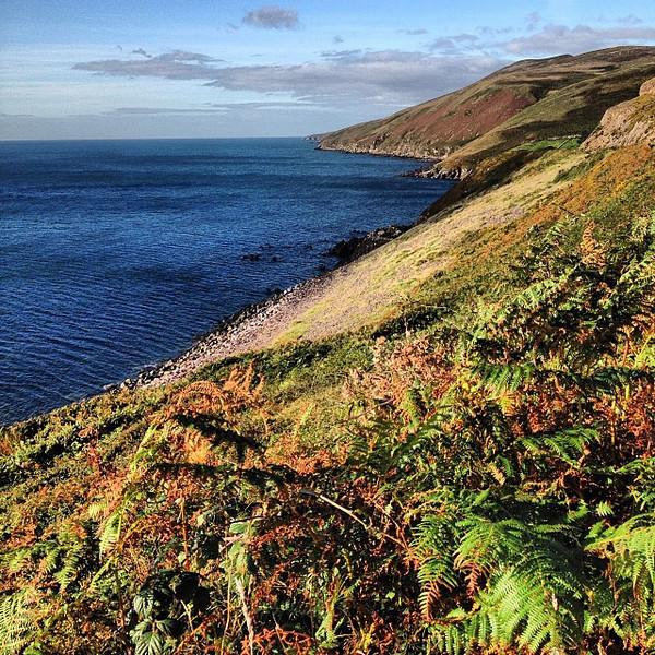 Irish autumn sun, foliage and ferns. Taken on the coastal route, Dingle Peninsula (en route from Killarney) #dna2ireland