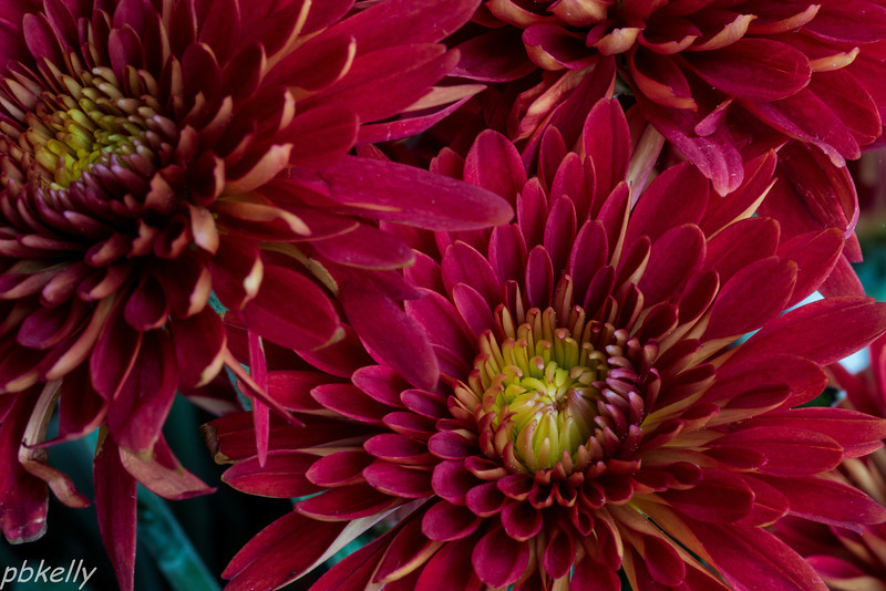 11-27.  Macro of my Thanksgiving bouquet.