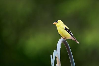 Backyard Birds 2021