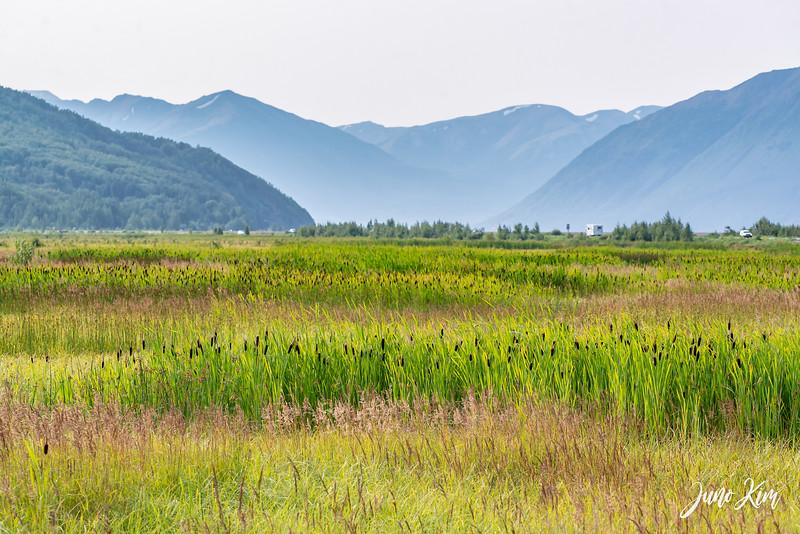 2020-07_Alaska Summer__6104134-Juno Kim-2000.jpg