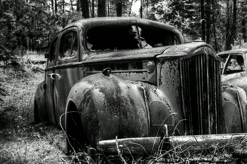 Rotting in the woods (2)
