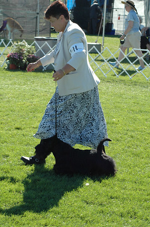 Assorted Dog Shows