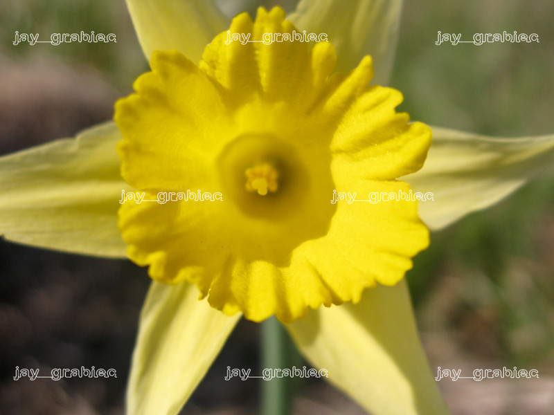 20100329_Flowers04.jpg