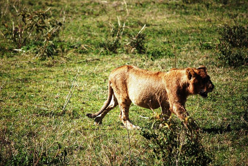 Ngorongoro (71).JPG
