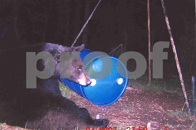 east-texas-bear-sightings-up-hunters-landowners-advised-to-be-on-lookout