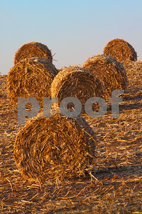 smith-county-hay-show-entries-sought