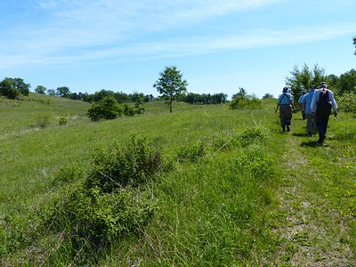20160616 Alderville Black Oak Savanna