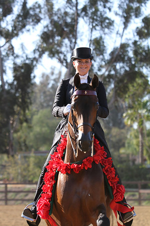 Under Saddle - Arena