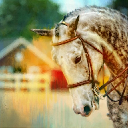 Opening Day at Devon Horseshow