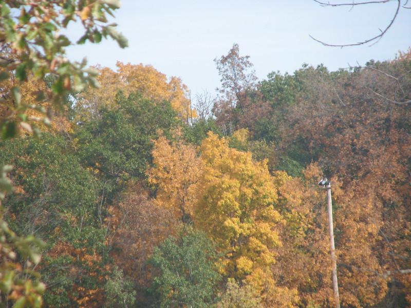 Fall pics 2008 026.jpg