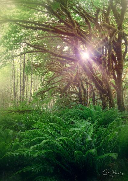 Hoh Rainforest II