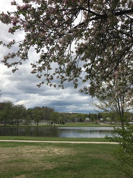 white park spring