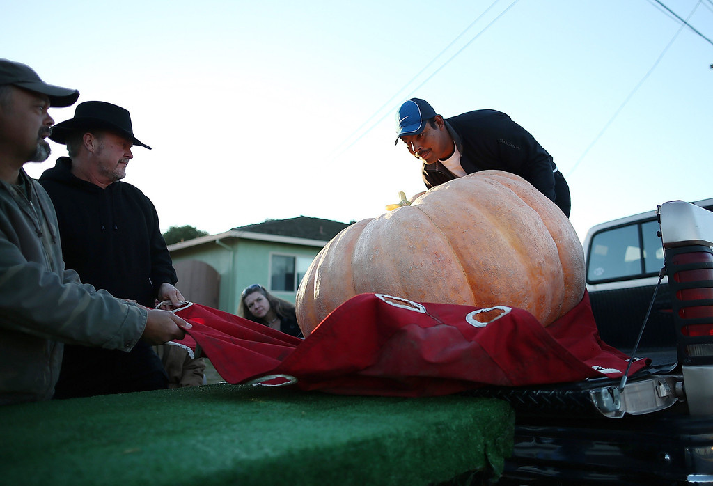 . Contestants move a giant pumpkin onto a forklift during the 40th Annual Safeway World Championship Pumpkin Weigh-Off on October 14, 2013 in Half Moon Bay, California.   (Photo by Justin Sullivan/Getty Images)