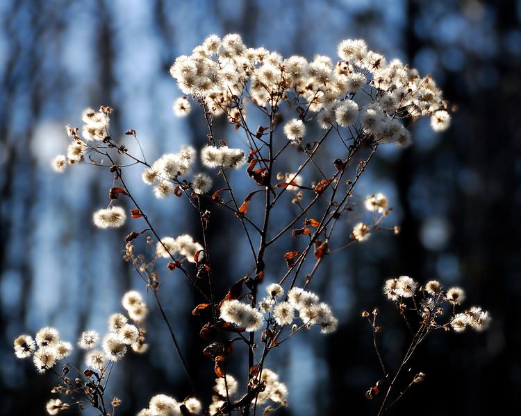 fleur_DSC0105.jpg